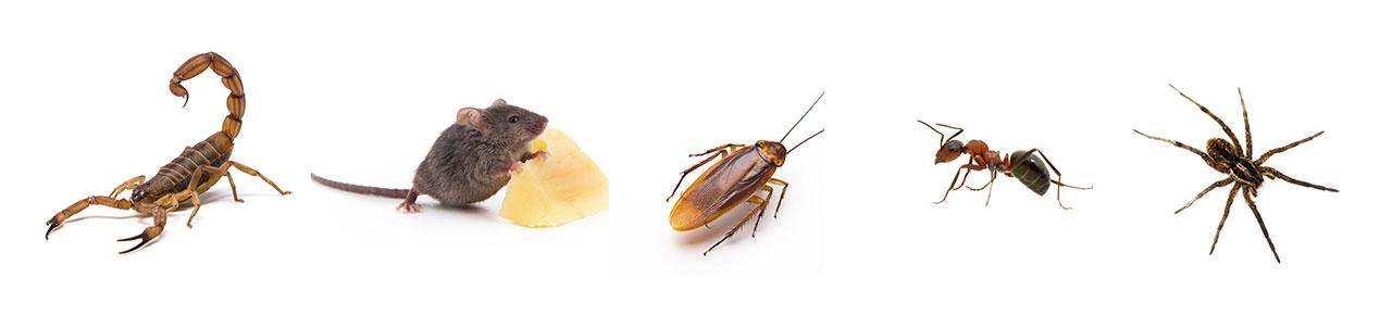 insectos_plagas